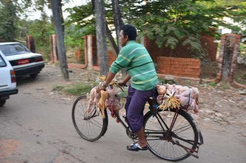 Chickens_Burma_myanmar