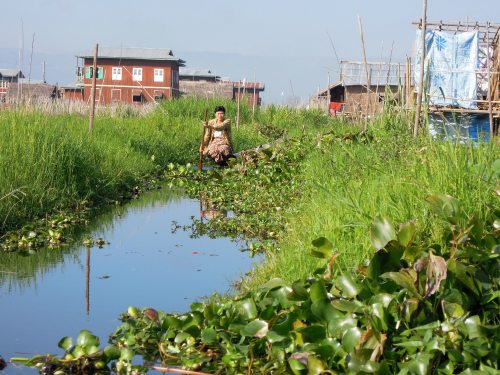 Floating_gardens_Inle_Lake_burma_myanmar
