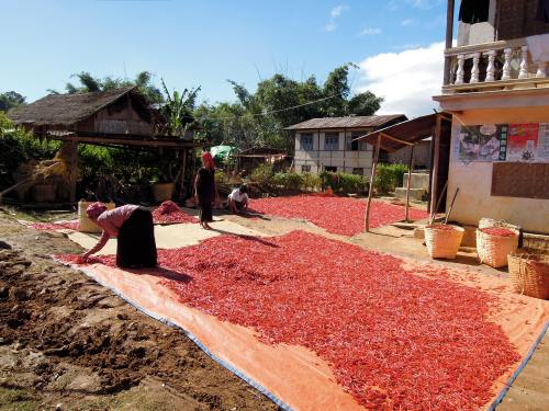 red_chillies_drying_burma_myanmar