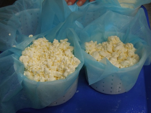 camembert_curds_cheeselinks