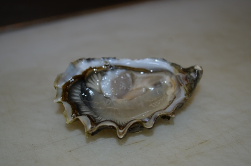 Pacific_Oyster