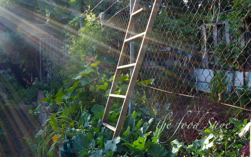 gardening_seedlings