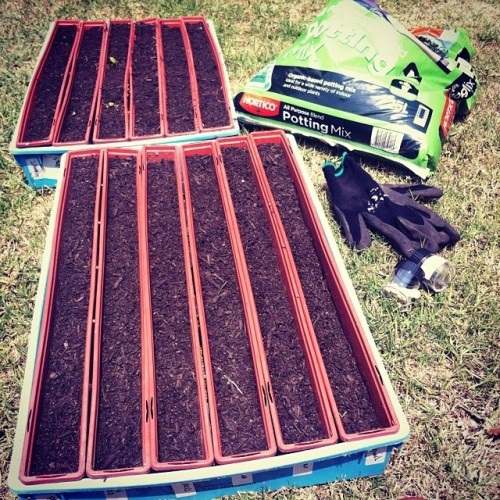 seed_trays_veggie_patch